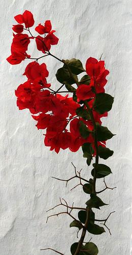 http://www.flickr.com/photos/papazimouris/ / CC BY-NC-SA 2.0