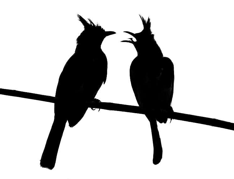 Silhouette of birds. Image courtesy of stock.xchng®